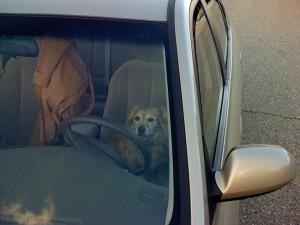 hyundai mange driving